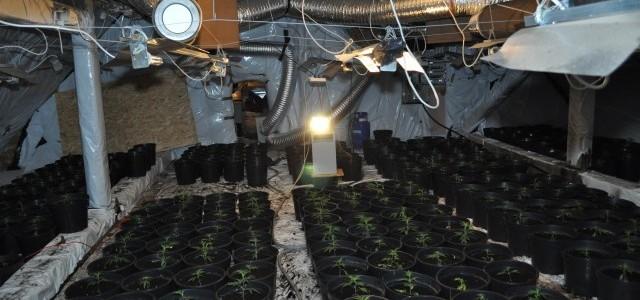 Plantacja konopi indyjskich przestała istnieć dzięki pracy głogowskich policjantów. Na terenie powiatu lubińskiego zatrzymali sześć osób oraz ujawnili linię technologiczną w trakcie produkcji narkotyków.