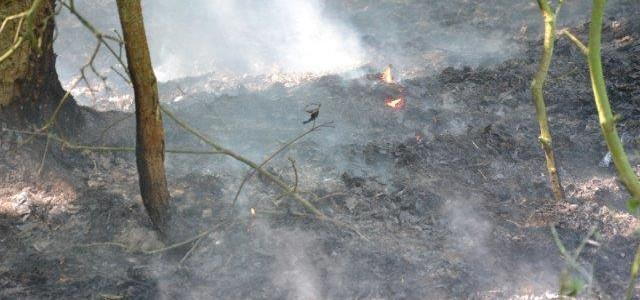 Suche drzewo złamało się na linię energetyczną o napięciu 110 kv pod Miłoradzicami. Doszło zwarcia, które […]